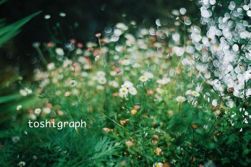 FH000013水辺の花.jpg