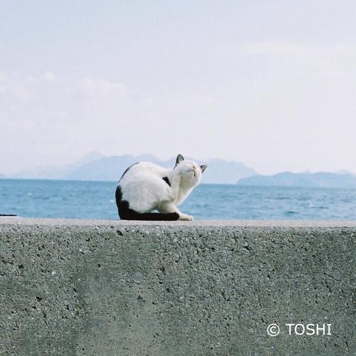 FH000015堤防の猫2.jpg