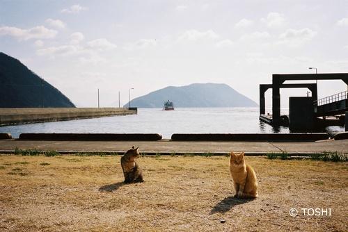 FH000015船と猫.jpg