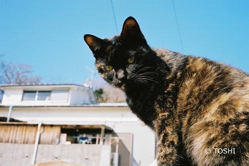 FH000019空と猫.jpg