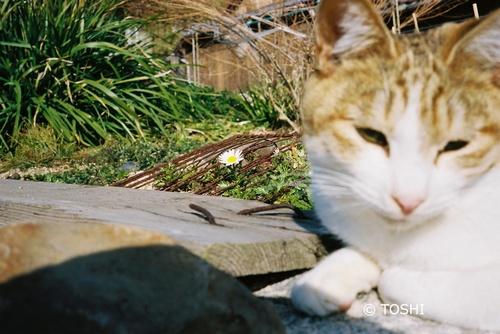 FH000022花と猫.jpg