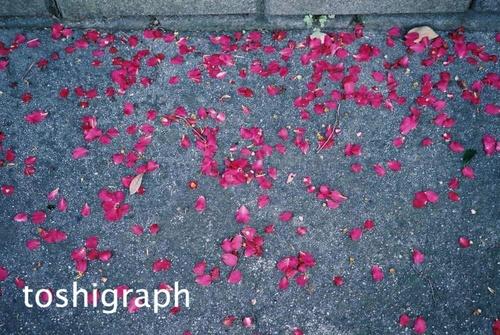 FH000022花びらP2.jpg