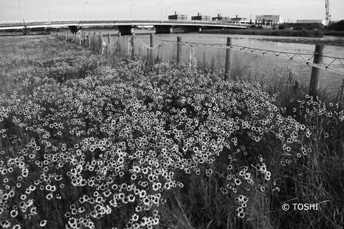 IMG_2087川沿い2.jpg