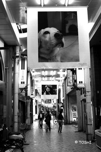 IMG_2403犬2.jpg