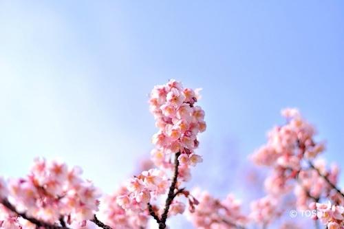 DSC_5789_546桜.jpg