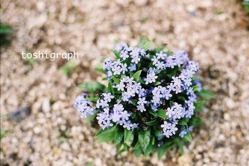 FH000013パープルな花.jpg