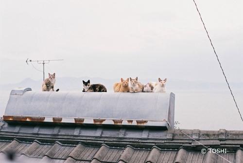 FH000019_4656男木島猫.jpg