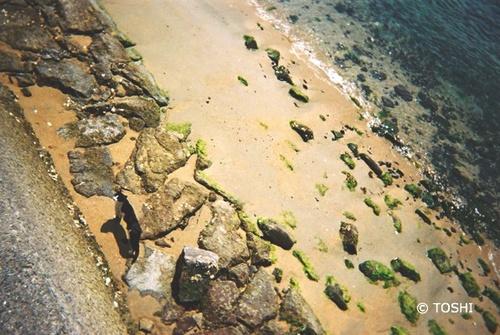 FL000029海猫.jpg