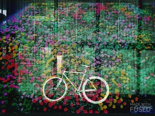 IMG_5971花自転車_8849.JPG